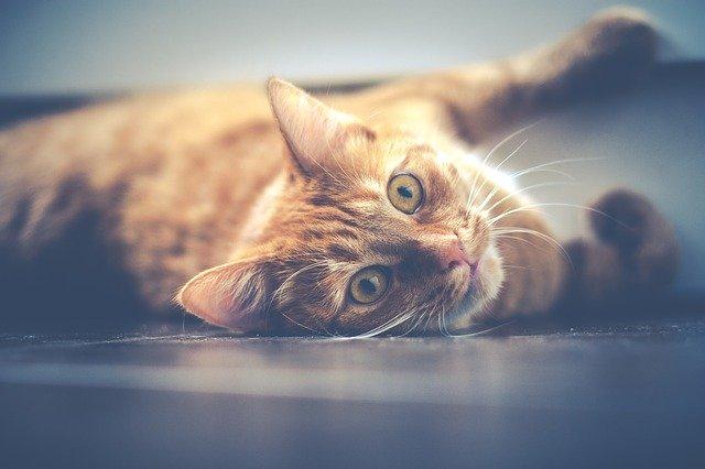 cat laying on floor